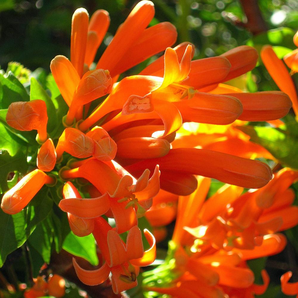Orange Flowers Garden La Palma La Palma Vakantiehuis